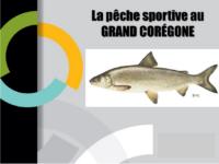 Grand coregone